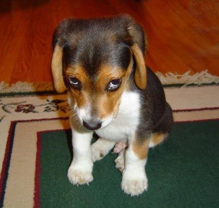 Sorry-Sad-Dog-Eyes