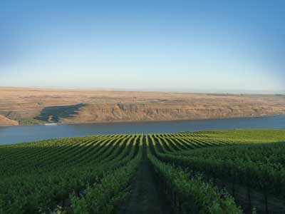 long-shadows-vineyard