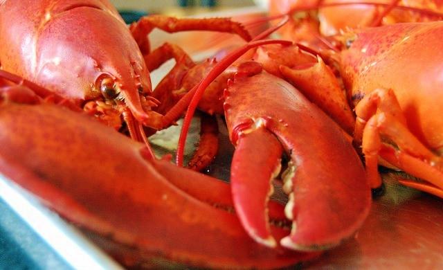 lobster porn