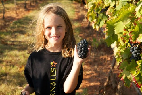 Pedernales Family Harvest