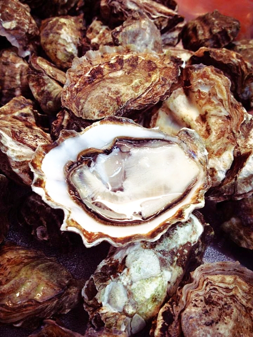 Rex's Kumamoto Oysters