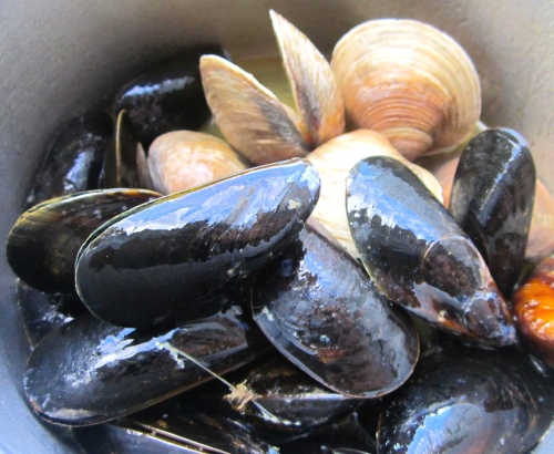 mussels and clam