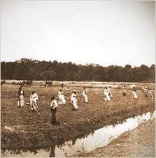 riceplantation