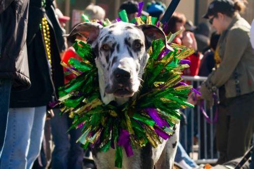 dog parade.jpg