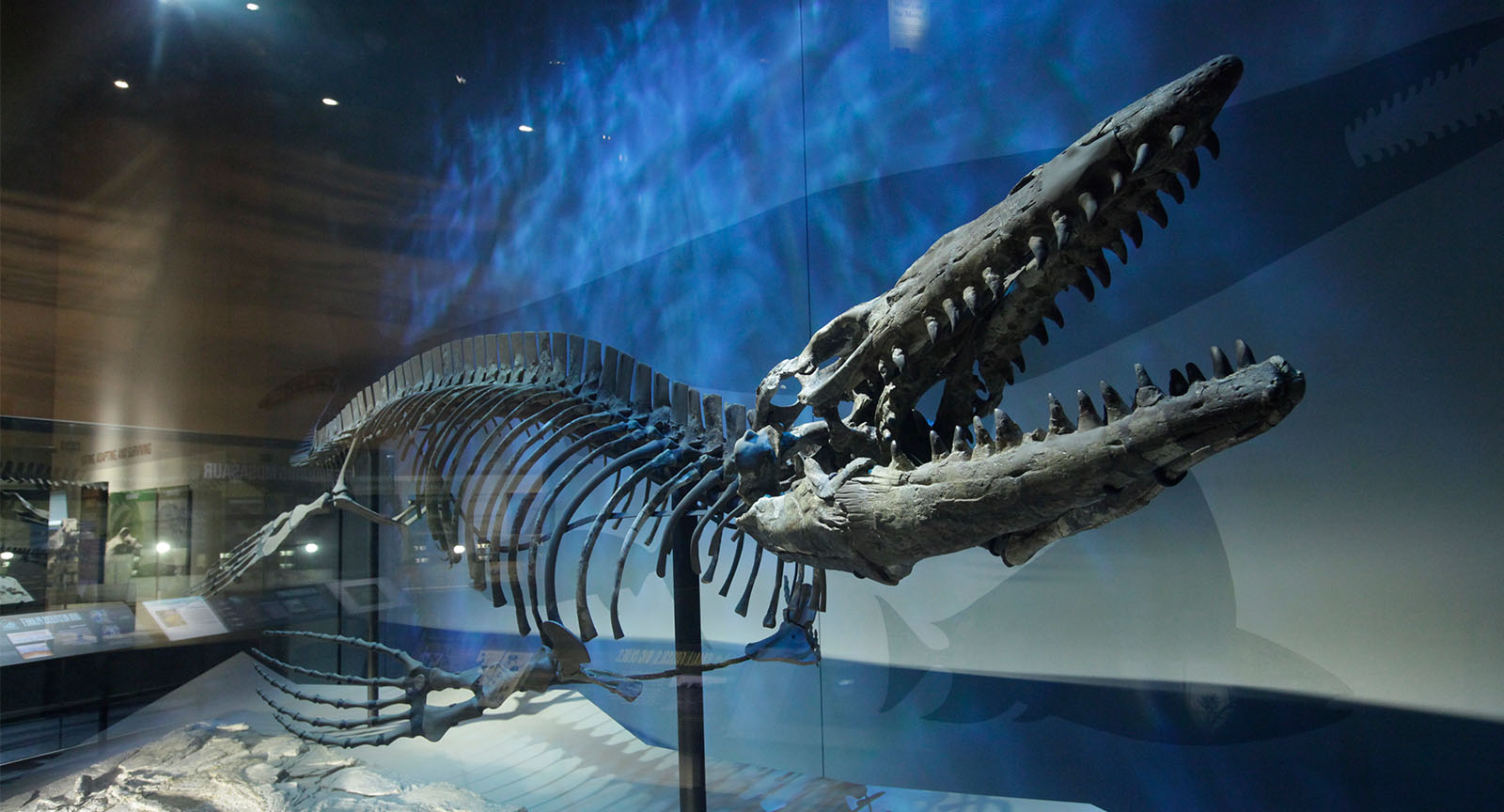 Perot-Museum-Main-Page-4.jpg